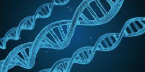 Gene – DNA